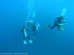 BD-070405-Similan-4050442-Homo-sapiens.-Linnaeus.-1758-[Diver].jpg